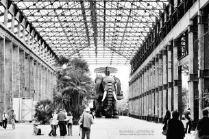 L'Eléphant sous les Nefs